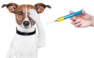 Первая прививка щенку: когда и какая