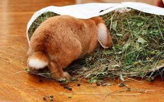 Лучший сухой корм для кроликов