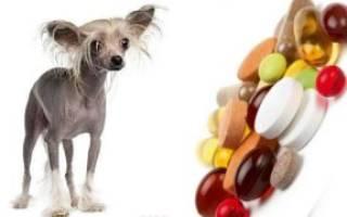Как давать собаке витамины