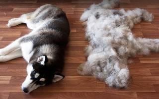 Почему собака линяет