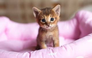 Ласковый котенок: черта личности или результат воспитания