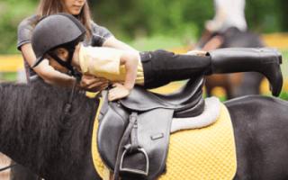 Как обучить лошадь: подготовка к верховой езде