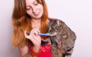 Виды зубных щёток для кошек