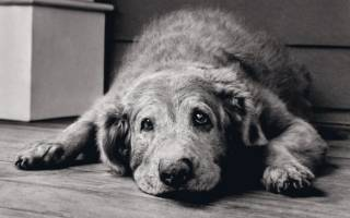 Болезни пожилых собак