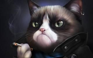 Чем кошка может заразить человека, способы передачи