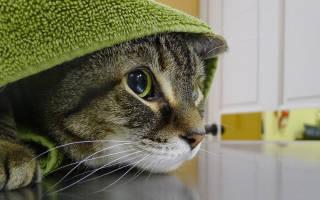 Как снять стресс у кошки