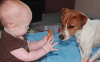Аллергия у детей на собак