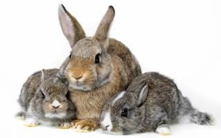 Как можно использовать навоз кроликов