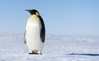 Все о пингвинах